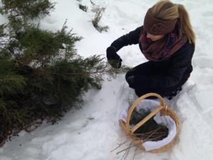 Tori picking pine